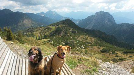 Meine zwei Hunde Lucy und Ella am Madritschen-Gipfel in den Kranichen Alpen