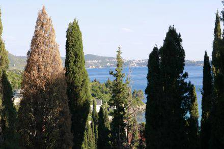 Meerblick vom Stellplatz am Camping Kate in Mlini bei Dubrovnik.