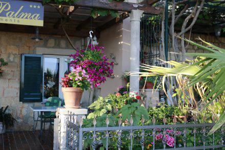 Blumenmeer im Garten einer kleinen Pension am Hafen von Mlini.