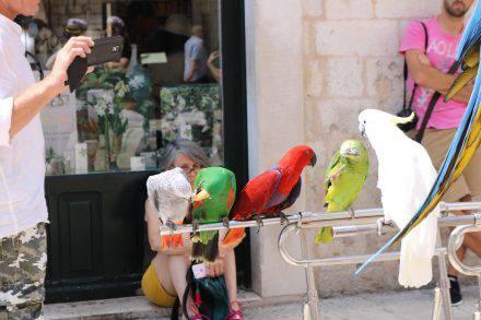 Die Papageien hatten nur Unsinn im Kopf - und der Kakadu schaut zu...