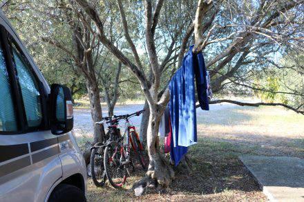 Der Campingplatz Mindel liegt inmitten eines Olivenhains. Das selbst produzierte Olivenöl ist goldfarben und köstlich.