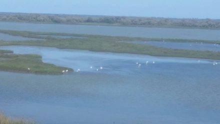 Rund 300 Vogelarten leben in den Lagunen des Po-Deltas