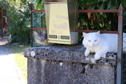 Zwei neugierige Katzen am Ortsausgang von Borgo Valsugana in Richtung Castelnuovo.