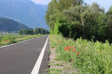 Mohnblumen säumen den Etschtalradweg.