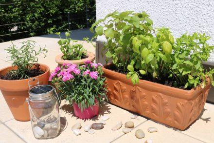 Mini-Kräutergarten auf dem Balkon. Mit Basilikum, Zitronenmelisse, Minze und Rosmarin.