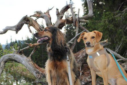 Meine zwei Vierbeiner auf Bergtour am Nassfeld.