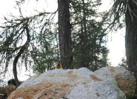 Auf dem Nassfeld kommt man den putzigen Murmeltieren sehr nahe.