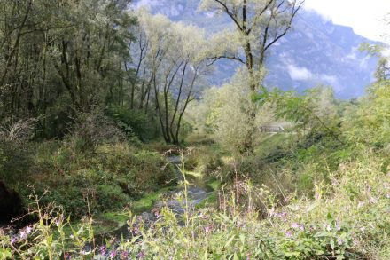 Naturbelassene Landschaften und wilde Blumen säumen die Brenta.