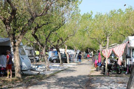 Große Parzellen und halbhohe Laubbäume auf dem International Camping Village Riccione.