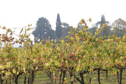 Die herbstlich gefärbten Weinreben im Hinterland von Cesenatico.