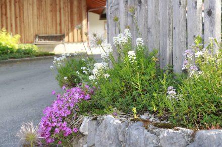 Blumenpracht auch im kleinsten Schwanenpark-Winkel.