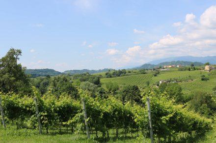 Hügel und Weinberge wohin das Auge reicht auf der Biketour in der Kommune Vittorio Veneto.