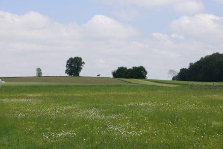 Ein einsamer Reiter zwischen den grünen Feldern und Wiesen.