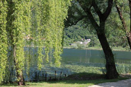 Seerosen und Bäume säumen den Lago di Lago auf der südlichen Seite.