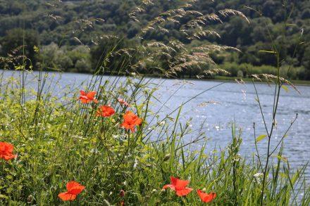 Meine Lieblingsblumen am Lago di Santa Maria.