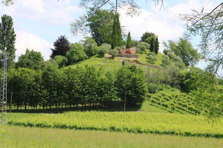 Entlang der Prosecco Straße fährt man immer wieder an Weingärten und -gütern vorbei.