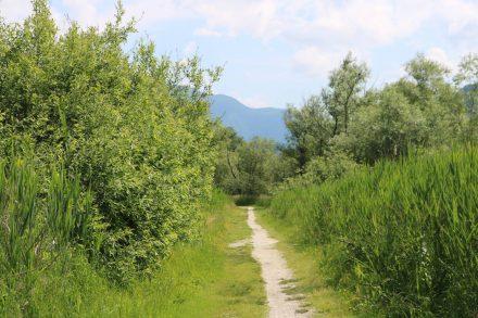 Der Naturwanderweg an den Seen entlang ist eher ein Pfad - aber Dank Vorsaison Bike-tauglich.
