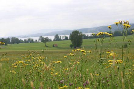 Blick von Woltersdorf auf den Waginger See.