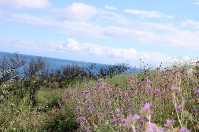 Blumen überall und dahinter das azurblaue Meer.