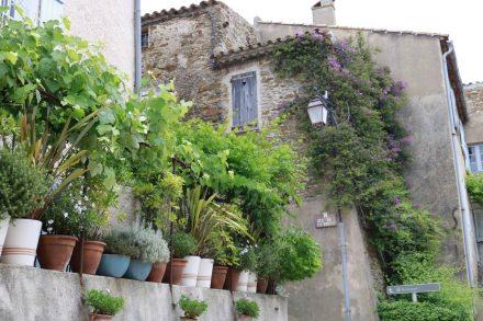 Gassin wirkt fast wie ein Wintergarten-Dorf mit den vielen Blumen und Pflanzen.