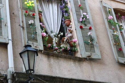 Üppige Fensterdekoration mit munterer Fellnase in Grasse.