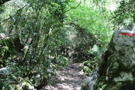 Farn und Moos machen aus der dichten Vegetation nahe der Basses Gorges einen märchenhaften Feenwald.