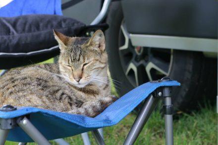 Unsere Camp-Katze hatte schnell auf dem Berger-Hocker ihren Lieblingsplatz gefunden.