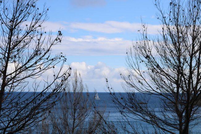 Die verkohlten Äste der Bäume ergeben zusammen mit dem blauen Meer ein interessantes Stilleben.