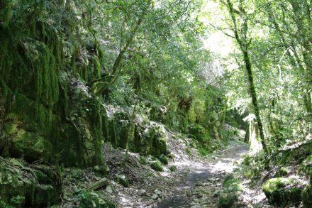 Der Weg vom Hochplateau runter zum Flussufer geht durch eine verwunschene Vegetation.