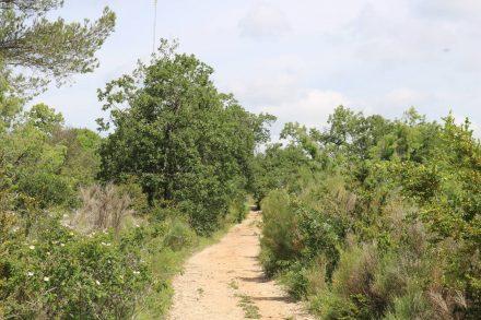 Der Rundwanderweg startet bei Quinson und geht durch dichte Vegetation zum Plateau de Mallasoque.