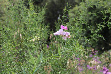 Die Vegetation ist dank des relativ vielen Regens herrlich grün und blütenreich.