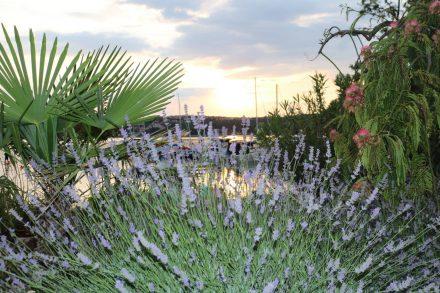Der hübsche Garten des Camping Slamni mit Sonnenuntergang über dem Hafen.
