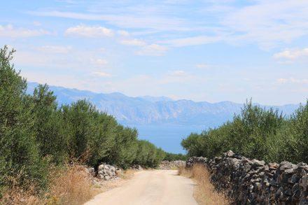 Durch Olivenhaine führt die Schotterstraße hinunter in die Bucht von Pokrivenik.