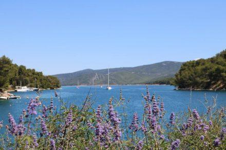 Die Zufahrt zum Hafen von Vrboska mit wunderschöner Lavendel-Dekoration.