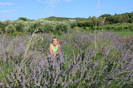 Der Rückweg der Radtour führt im hügeligen Hinterland durch wilde Lavendelfelder.