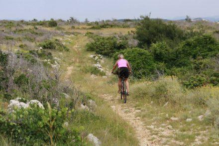 Mehrere Kilometer geht es auf Wanderpfaden durch den Nationalpark - nur ein Reh begegnet uns.