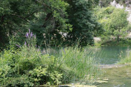 Auf kleinen Inselchen blühen Blumen mitten im Wasser.