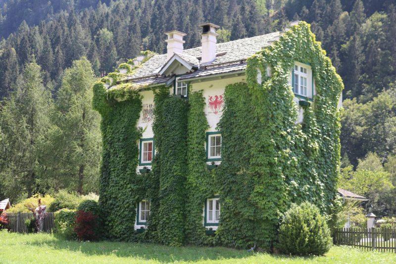 Verwunschene Häuser ganz in Wein gehüllt.