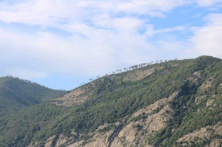 Vom Schiff aus sehen die einsamen Bäume auf den Klippen aus wie indianische Späher.