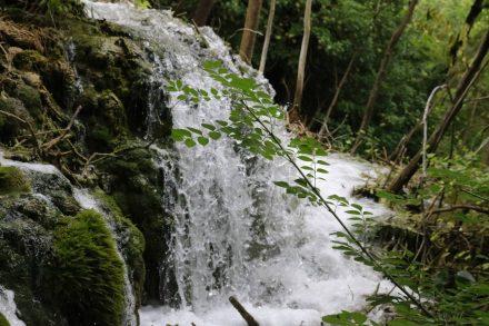 Mehr ein Sprudelfall als ein Wasserfall mitten zwischen Moos und Wald.