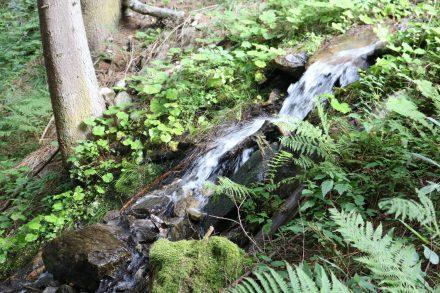Moos, Farne und Gräser umrahmen das klare Wasser.