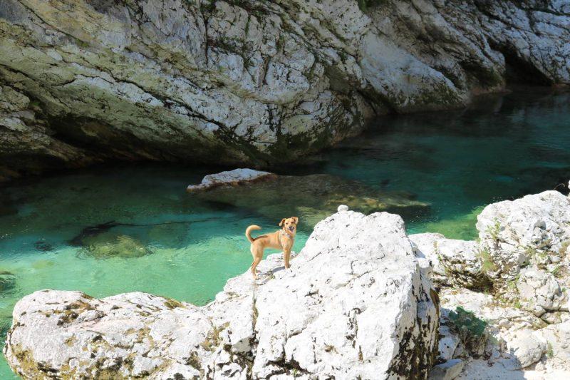 Schlucht mit Hund - ein Paradies für alle Fellnasen.