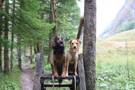 Lucy und Ella auf einem Mini-Hochsitz.