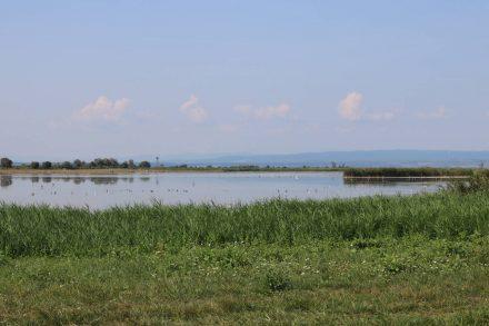 Der ungarische Nationalpark Ferggt-Hansag ist wunderschön naturbelassen.