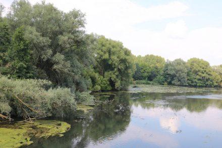 Der Pegnitzgrund ist ein fast naturbelassenes Naherholungsgebiet im Herzen der Stadt.