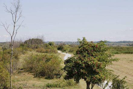 Der Radweg zieht sich durch Steppenlandschaft.