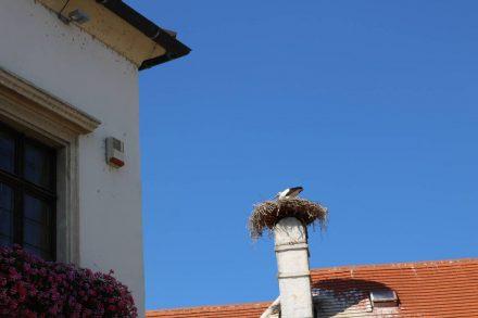 Auf den Schornsteinen der Ruster Häuser nisten Storchenpaare.