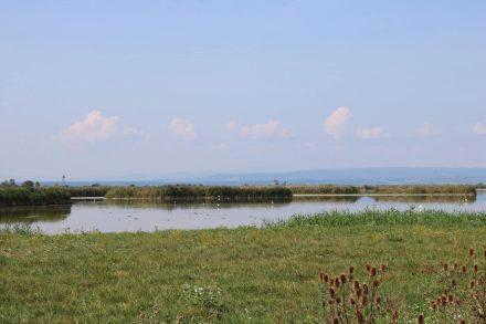Die flachen, schilfumrahmten Teile des Sees sind ein Paradies für unterschiedlichste Wasservögel.