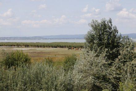 Hinter dem Schilfgürtel am See ist Weideland.