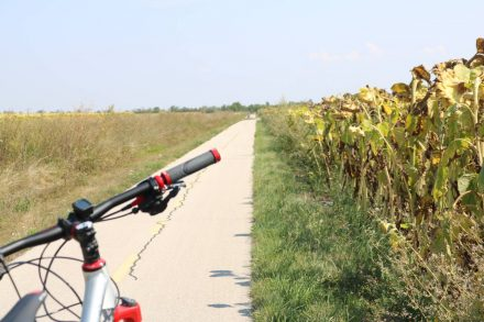 Zwischen Sonnenblumenfeldern bei 30 Grad immer schnurgerade.